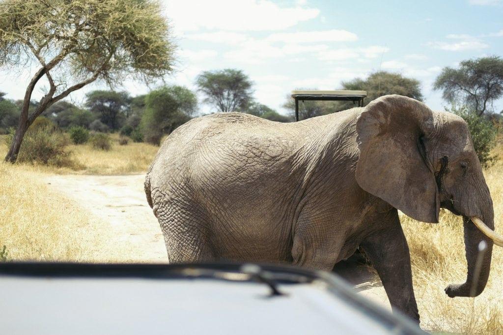 SAFARI SELFIE | ZELF RIJDEN DOOR TANZANIA'S NATUURPARKEN 33