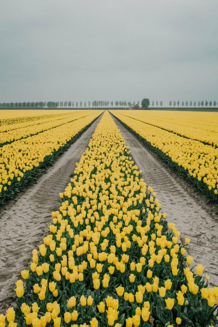 Fotoworkshop Tulpen 'This is Holland' | Zondag 18 April 2021 8