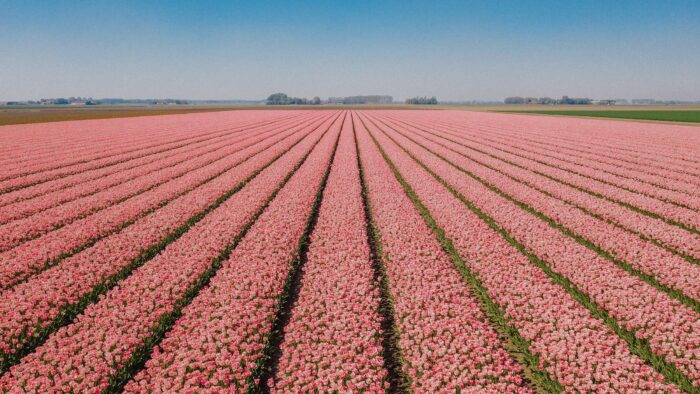 Fotoworkshop Tulpen 'This is Holland' | Zondag 2 Mei 2021 8
