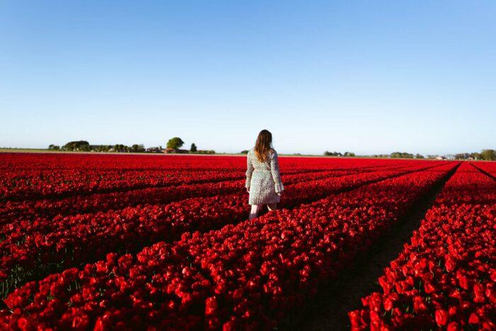 Fotoworkshop Tulpen 'This is Holland' | Zondag 18 April 2021 2