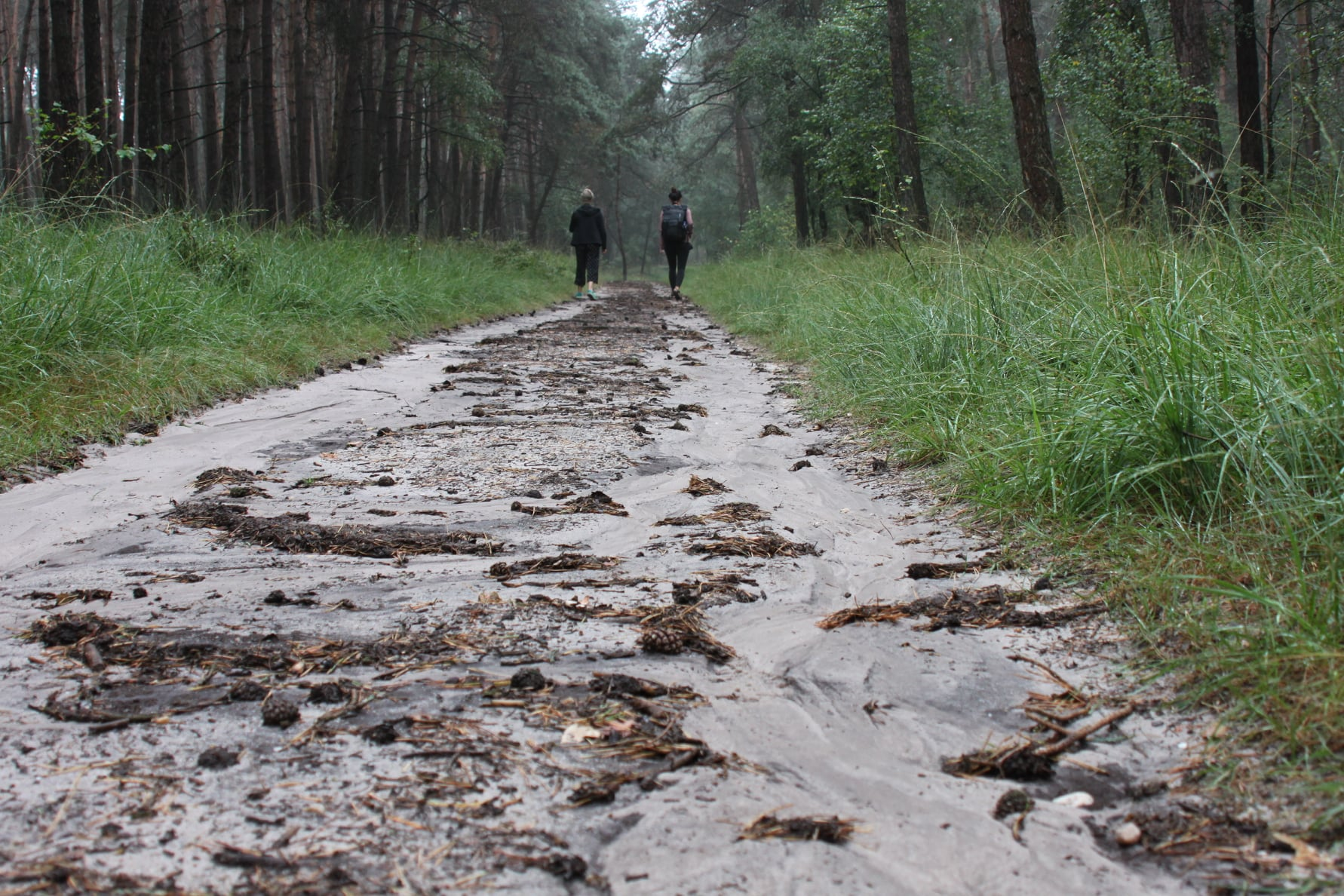 Fotoworkshop Veluwe - ROCKY ROADS TRAVEL