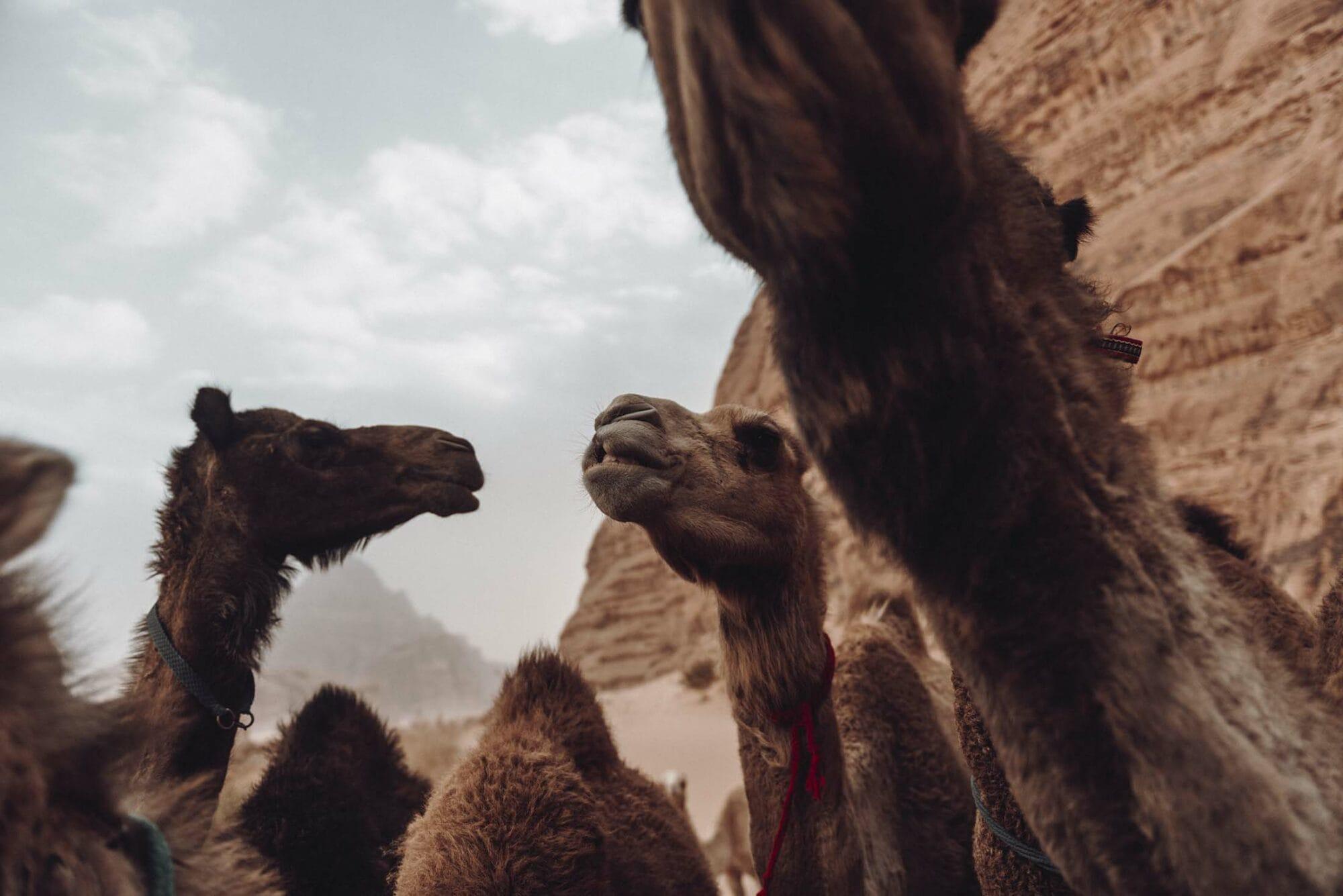 Fotoreis naar Jordanie | ROCKY ROADS TRAVEL