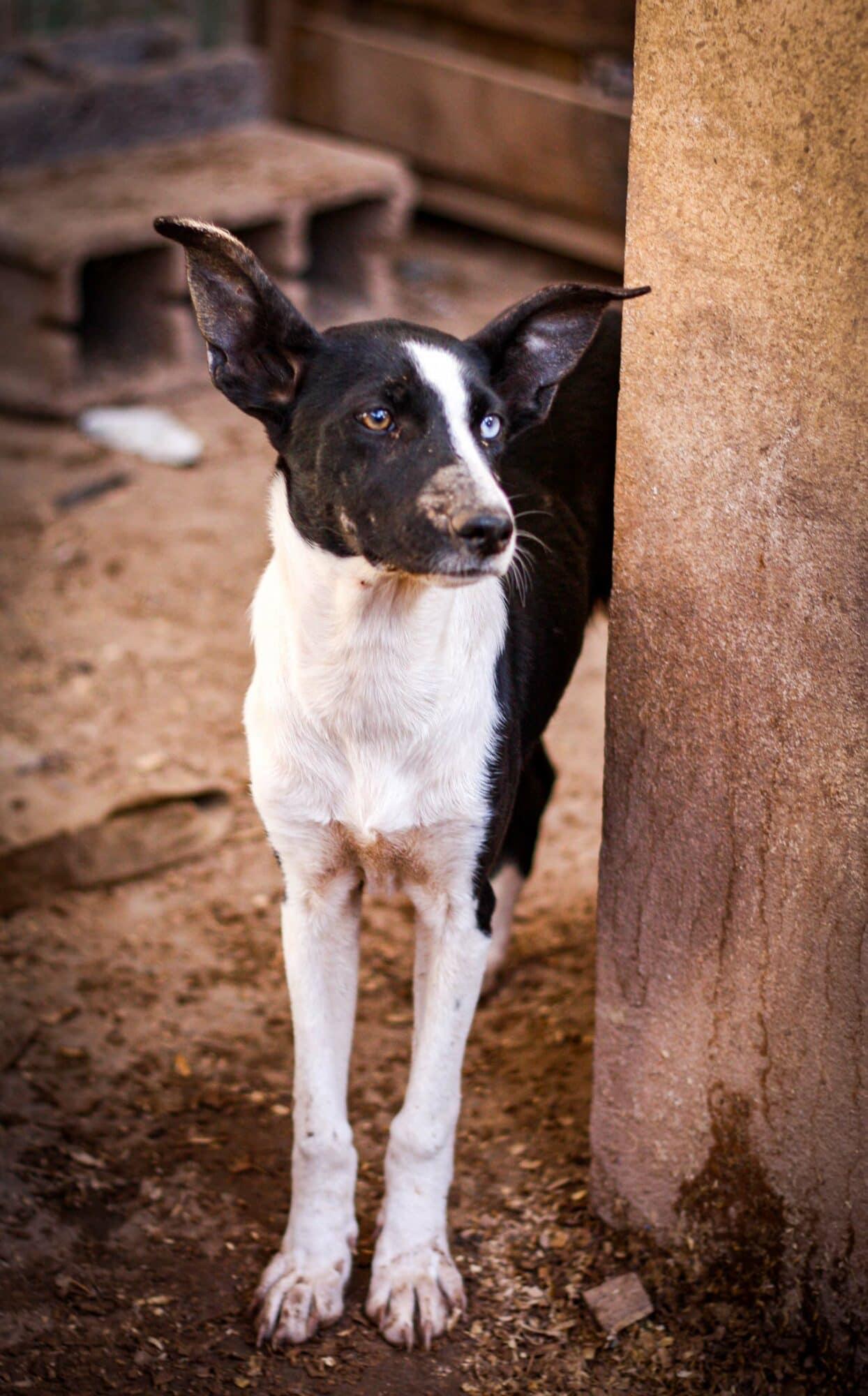 Fotoreis Marokko – Tamraght Morocco Animal Aid