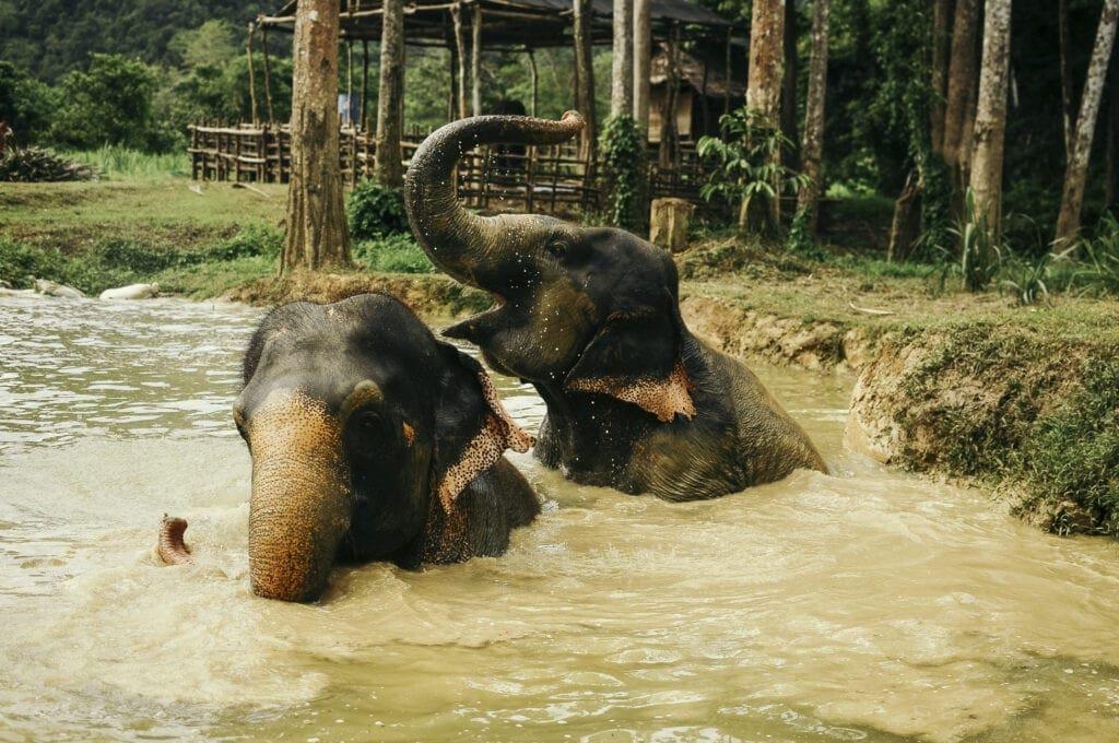 Ontmoet olifanten in Thailand   Rocky Roads Travel