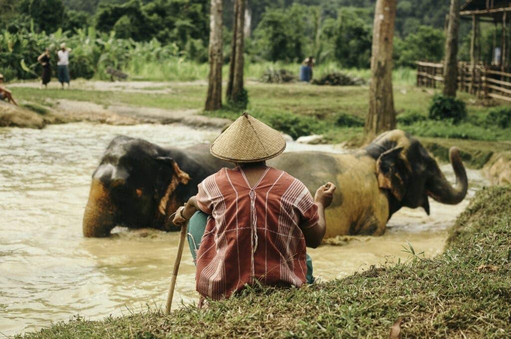 Ontmoet Olifanten in Thailand - Rocky Roads Travel