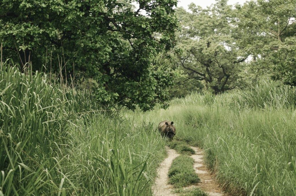 NEUSHOORNS IN CHITWAN | ROCKY ROADS TRAVEL