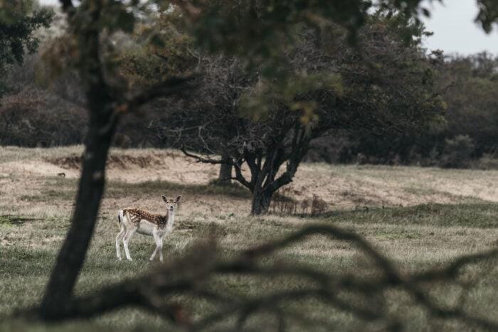 Fotoworkshop Amsterdamse Waterleidingduinen Fotoworkshop Oh My Deer | ROCKY ROADS TRAVEL