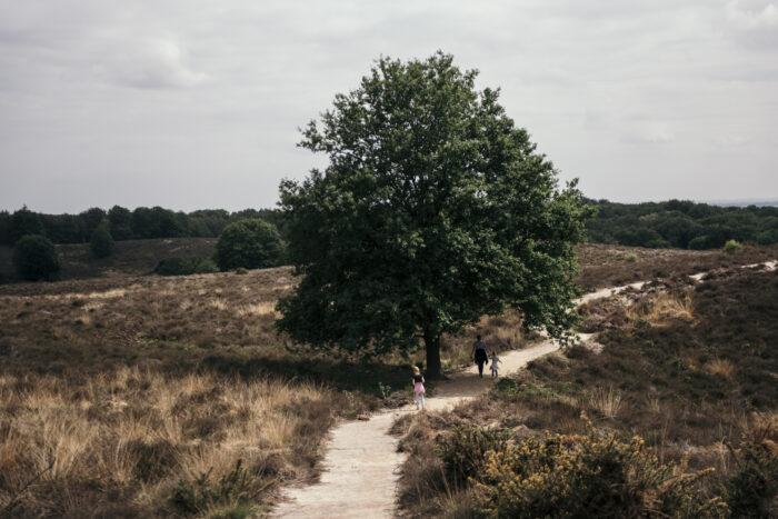 Fotoworkshop Veluwe Heather & Hills - ROCKY ROADS TRAVEL