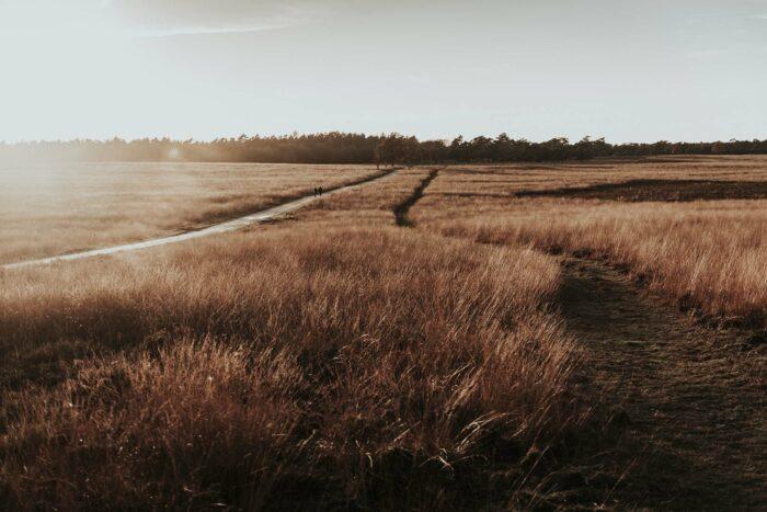 Fotoworkshop Veluwe - ROCKY ROADS TRAVEL