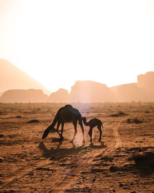 Fotoreis Wadi Rum, Jordanie - Rocky Roads Travel