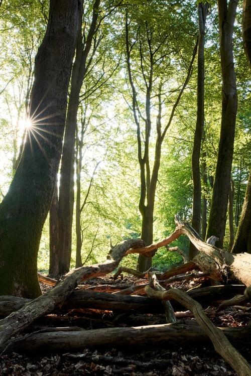 Fotoworkshop Speulderbos 'Autumn Magic ' met CHRIS KÖNIG | Zaterdag 27 November 2021 3