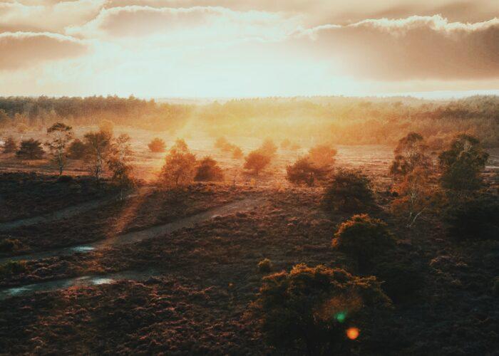 Fotoworkshop Veluwe Forest & Faces - ROCKY ROADS TRAVEL
