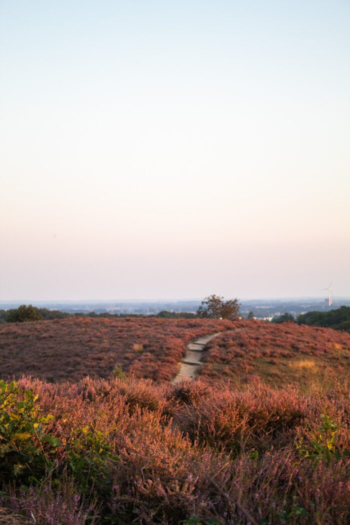 Fotoworkshop Veluwe Forest & Faces - ROCKY ROADS TRAVEL
