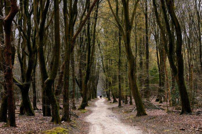 Rocky Roads Speulderbos